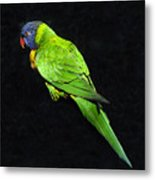 Parrot In Black Metal Print
