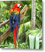 Parrot In Tropical Setting Metal Print
