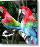 Parrot Partners Time To Make Up Metal Print
