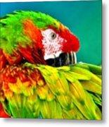 Parrot Time 2 Metal Print