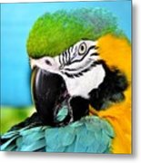 Parrot Time 3 Metal Print