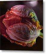 Parrot Tulip 4 Metal Print