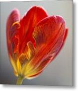 Parrot Tulip 9 Metal Print