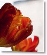 Parrot Tulips 18 Metal Print by Robert Ullmann