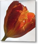 Parrot Tulips 19 Metal Print by Robert Ullmann