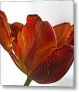 Parrot Tulips 20 Metal Print