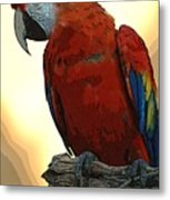 Parrot Watching Metal Print