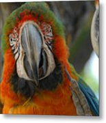Parroting Information Metal Print