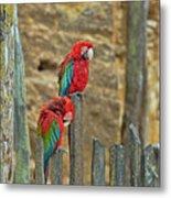 Parrots, Doue-la-fontaine Zoo, Loire, France Metal Print