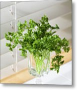 Parsley Bouquet Metal Print