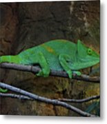 Parson's Chameleon Metal Print