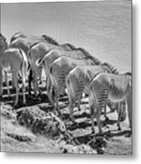 Party Of Eight  6973bw Metal Print