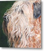 Pascal, Soft Coated Wheaten Terrier Metal Print