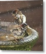 Pass The Towel Please: A House Sparrow Metal Print