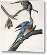 Passenger Pigeon Metal Print by John James Audubon