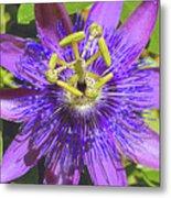 Passion Flower 2 Metal Print