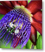 Passion Flower Ver. 11 Metal Print