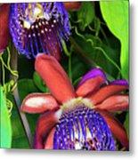 Passion Flower Ver. 12 Metal Print