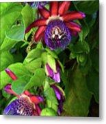 Passion Flower Ver. 16 Metal Print