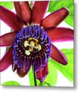 Passion Flower Ver. 5 Metal Print