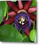 Passion Flower Ver. 8 Metal Print
