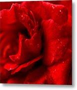 Passion For Flowers. Sensual Petals Metal Print
