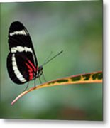 Passion-vine Butterfly 2017 Metal Print