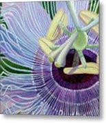 Passionflower Vine Metal Print