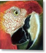 Pastel Of Red On The Head  Metal Print