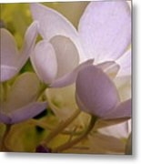 Pastel Purple Pleasure Metal Print