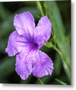 Pastel Purple With Raindrops Metal Print