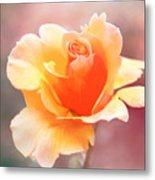 Pastel Rose Metal Print