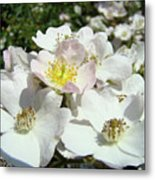 Pastel White Yellow Pink Roses Garden Art Prints Baslee Metal Print
