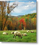 Pasture - New England Fall Landscape Sheep Metal Print