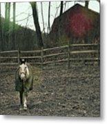 Pasture Pony Metal Print