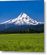 Pasture View Of Mt. Hood Metal Print