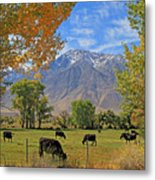 Pasture With A View Metal Print