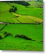 Pastures In The Azores Metal Print