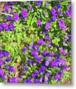 Patch Of Pansies Metal Print