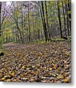 Path Home - Kettle Moraine 10-14-16 Metal Print