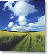 Path In A Countryside Metal Print