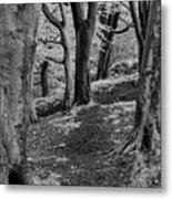 Path In Crownest Woods Metal Print