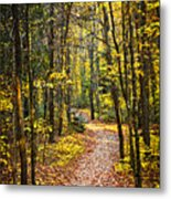 Path In Fall Forest Metal Print