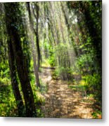 Path In Sunlit Forest Metal Print by Elena Elisseeva