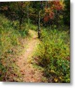 Path In The Prairie Metal Print