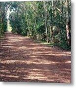 Path Into The Jungle Metal Print