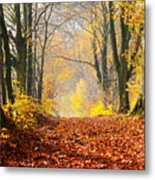 Path Of Red Leaves Towards Light Metal Print