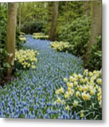 Path Of The Beautiful Spring Flowers Metal Print