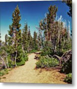 Path On Top Of Mt. Howard, Wallowa Or Metal Print