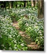 Path Through A Deciduous Forest, Wild Garlic Metal Print